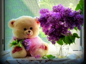 happy teddy day 2019 quotes